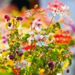 Spring background, bright blur colors — Stock Photo