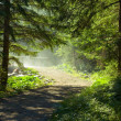 Morning sun beams in the forest — Stock Photo