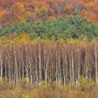 Autumn, Bieszczady mountains — Foto Stock