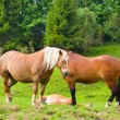 Horses on a summer pasture — Stock Photo #31180593