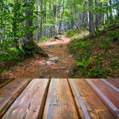 Beautiful sunlight in the autumn forest and wood planks floor — Photo