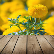 Asteraceae in a botanical garden and empty wooden deck table. — Stock Photo