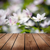 White anemone flowers and empty wooden deck table. — Stock Photo