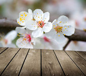 Apple blossoms in spring and empty wooden deck table — Stock Photo