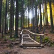 Stone road in a coniferous forest in the mountains, Tatras Mountain, Poland — Stock Photo #33306227