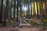 Stone road in a coniferous forest in the mountains, Tatras Mountain, Poland — Stock Photo
