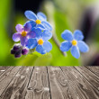 Forget me not and empty wooden deck table. — Stock Photo