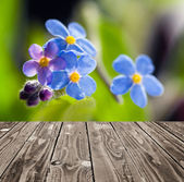 Forget me not and empty wooden deck table. — 图库照片
