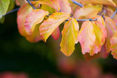 Autumn leaves. Autumn background — Stock Photo