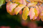 Autumn leaves. Autumn background — Stock Photo