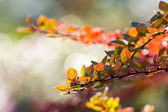 Abstract background of autumn leaves. Autumn background — Foto de Stock