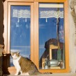 The cat sits at a window — Stockfoto
