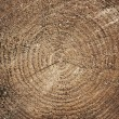 Wood texture of cutted tree trunk, close-up — Stock Photo
