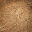 Wood texture of cutted tree trunk, close-up — Stock Photo #37664911