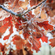Winter background, hoarfrost on leaves — Stock Photo #38206645