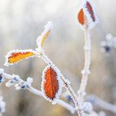 冬の背景、葉の上の霜 — ストック写真
