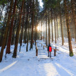 Stock Photo: Winter forest, RusinowPolana, High Tatras, Poland