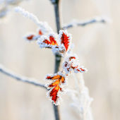Winter background, hoarfrost on leaves — Stockfoto