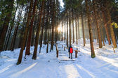 Winter forest, Rusinowa Polana, High Tatras, Poland — Stock Photo