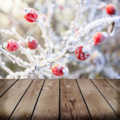 Winter background, red berries on the frozen branches covered wi — Foto de Stock