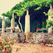 Greek garden, vintage look — Stock Photo