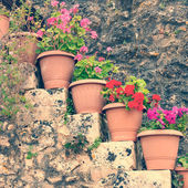 Flowers in the pots, vintage look — Stock Photo