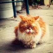 старинные портрет маленькой кошечки — Стоковое фото