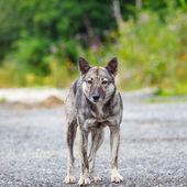 Furious dog — Stock Photo