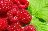 Raspberry on a background of leaves — Stock Photo