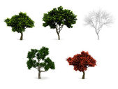 3d trees pack isolated on white. — Stock Photo