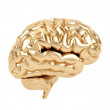 Golden brain on a white background. — Stock Photo #16271883