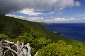 Coastline landscape of Pico island, Azores — Stock Photo