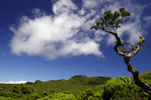 Typical landscape of the interior of the Pico island. Azores — Stock Photo