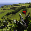 The picturesque views of the Faial island, Azores - Stock Photo