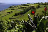 The picturesque views of the Faial island, Azores — Stock Photo