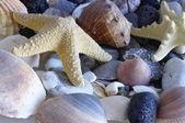 Morza muszle, muszle — Zdjęcie stockowe