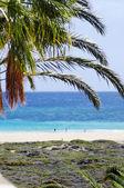 Beach of Morro Jable, Fuerteventura, Canary island, Spain — Zdjęcie stockowe