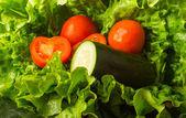 Marul ve domates salatası — Stok fotoğraf