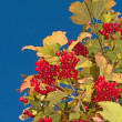 Stock Photo: Berries and blue sky