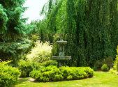 Lush garden — Stock Photo