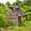 Shack in woods — Stock Photo