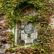 Window covered with ivy — Stock Photo