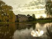 Swan scene — Stock fotografie