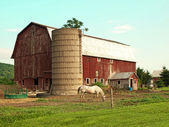 Horse and barn — Stock Photo