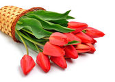 Red tulips in the basket — Stock Photo