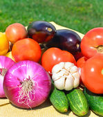 Fresh vegetables on the green grass — Stock Photo