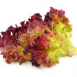 Stock Photo: Fresh red lettuce isolated on white