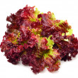 Stock Photo: Fresh red lettuce