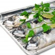 Stock Photo: Fresh mackerel fish with parsley on aluminium foil tray