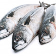 Stock Photo: Fresh mackerel fishes